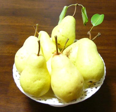 07_pear_harvest_72_1_