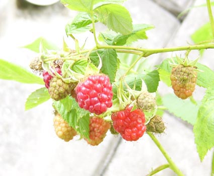 0807_red_raspberry_3_s_
