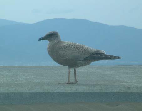 08_seagull_2