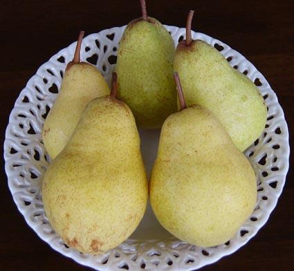 0809_pear_1