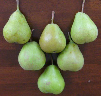 0809_pear_2