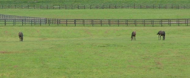 081020_horse_3_3