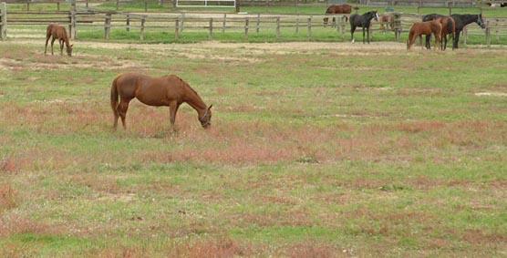 081020_horse_6
