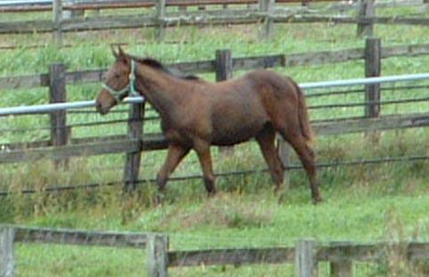 Horse_4_