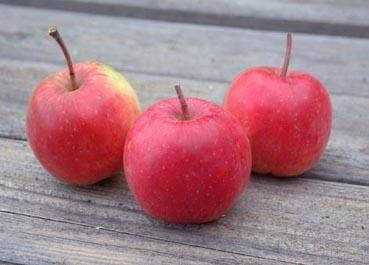 0909_apple_2_