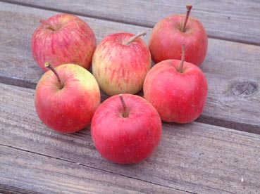 0909_apple_3_