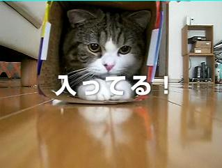 Uq_wimax__012_2